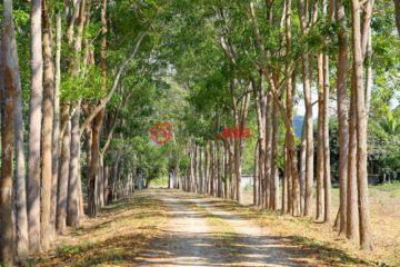 泰国总占地31060平方米的土地